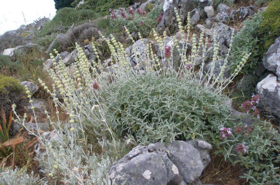 Nature in Crete